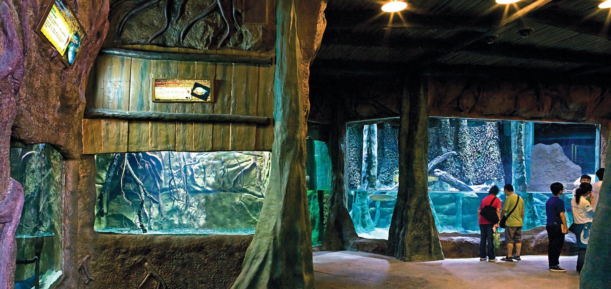 香港海洋公園高峰樂園熱帶雨林天地